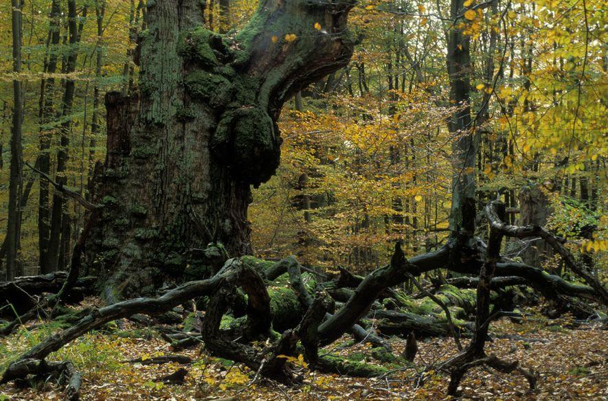 10 Fakten zum deutschen Wald