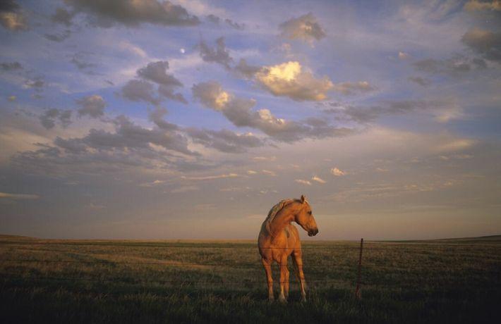 Ein Pferd bei Sonnenuntergang auf einer Koppel in Howes, South Dakota.
