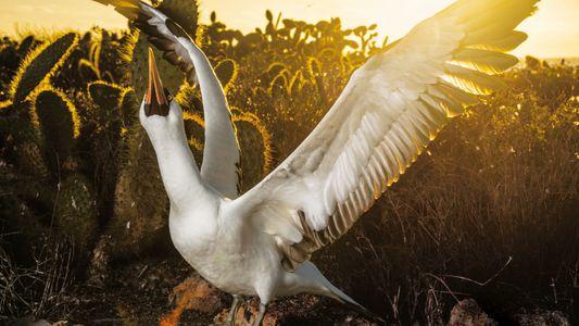 Galerie: Leben und Sterben auf den Galápagosinseln
