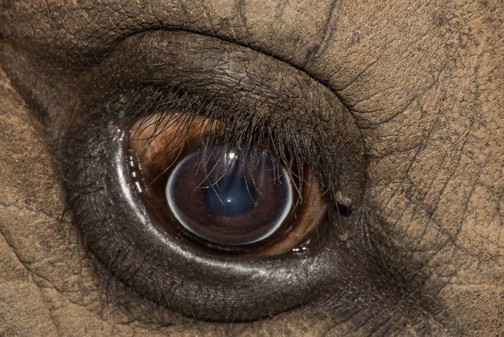 Diese Augen brauchen deine Hilfe!
