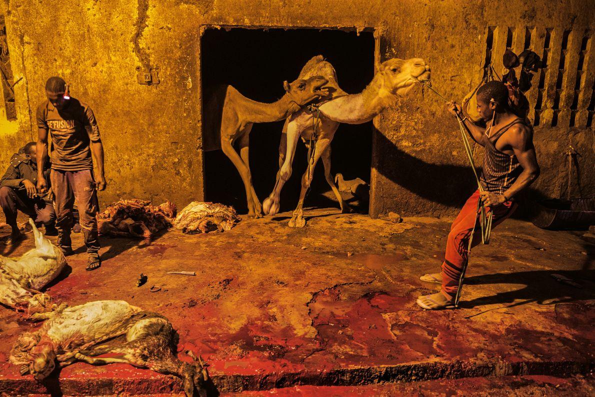 Viehmarkt von Agadez