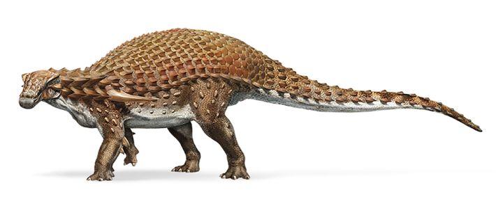 Zeichnung des Nodosaurus