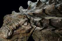 Nodosaurier