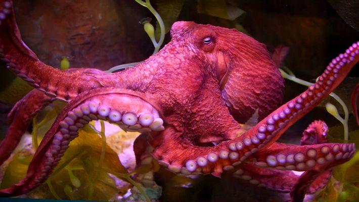 Wissen kompakt: Oktopoden