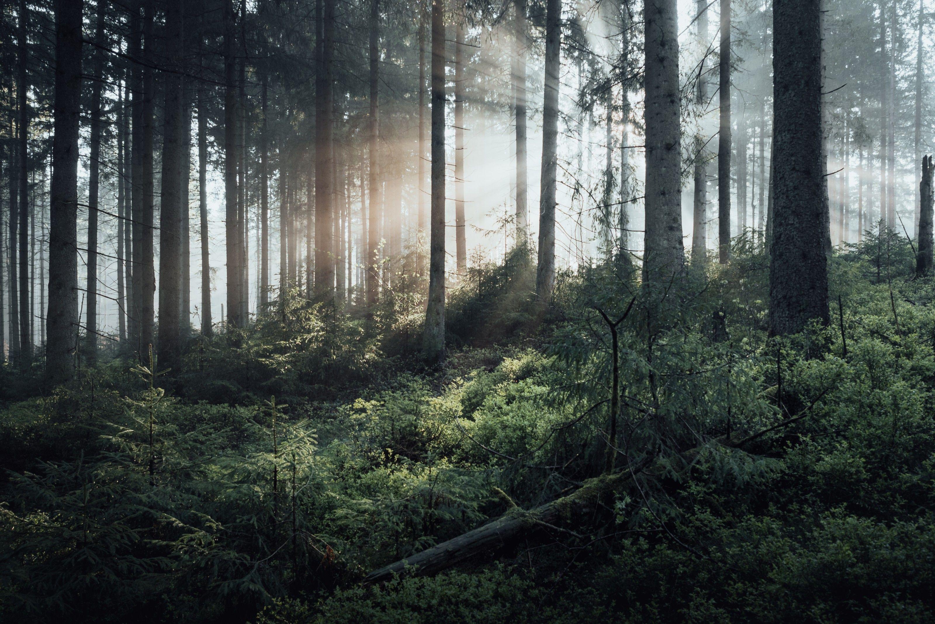 Wildnis vor der Haustür: Ein Streifzug durch die Wälder im Harz | National Geographic