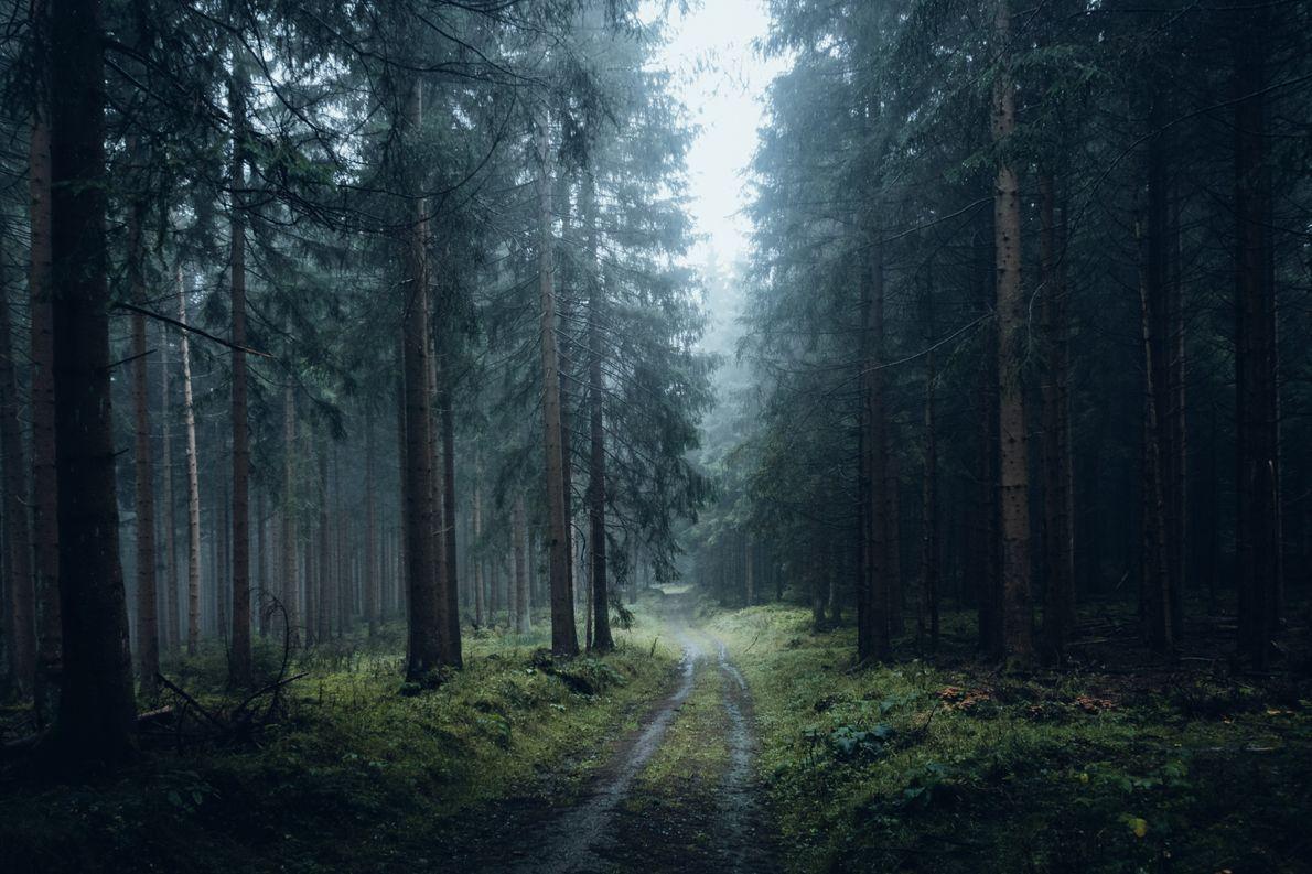 Zahlreiche Wanderwege führen durch die verschiedenen Landschaften des Harz, von Seen und Wäldern über Moore bis …