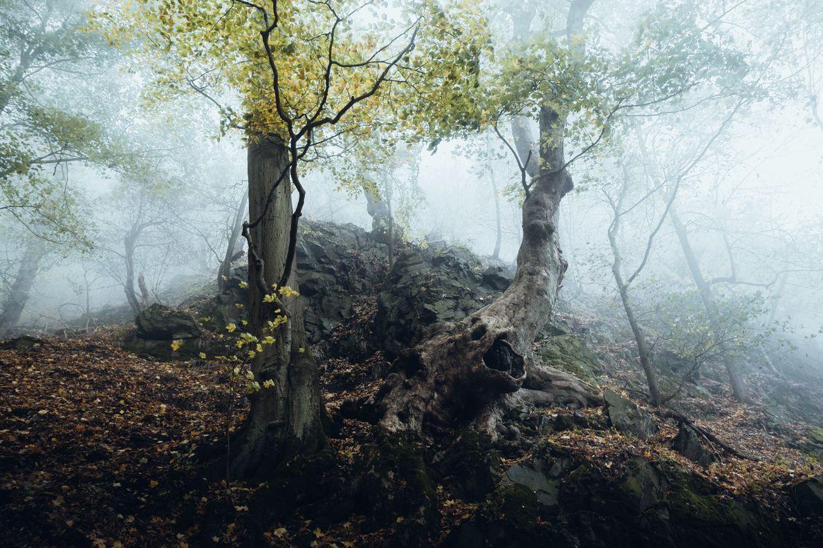 Knorrige Bäume wachsen auf den felsigen Hängen der Region und scheinen direkt einem Grimm'schen Märchen entsprungen …