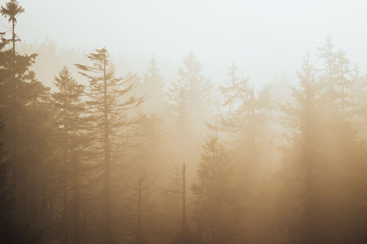 Die Sonne taucht den Wald im Harz in ein goldenes Licht.