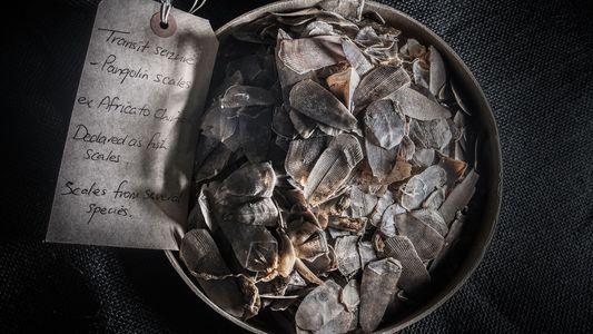 Galerie: Fesselnde Bilder geben Einblicke in die Welt der Schmuggelware