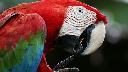 Rosalinda aus Taka-Tuka-Land und der Artenschutz von Papageien
