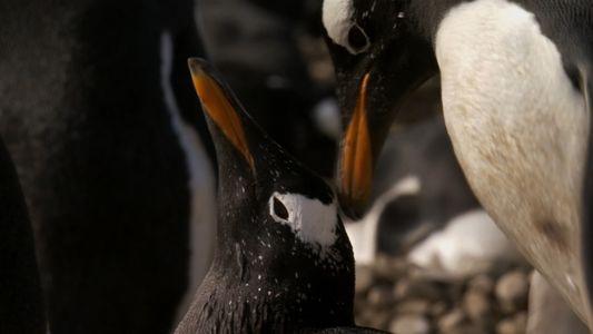 Pinguin-Lovestory