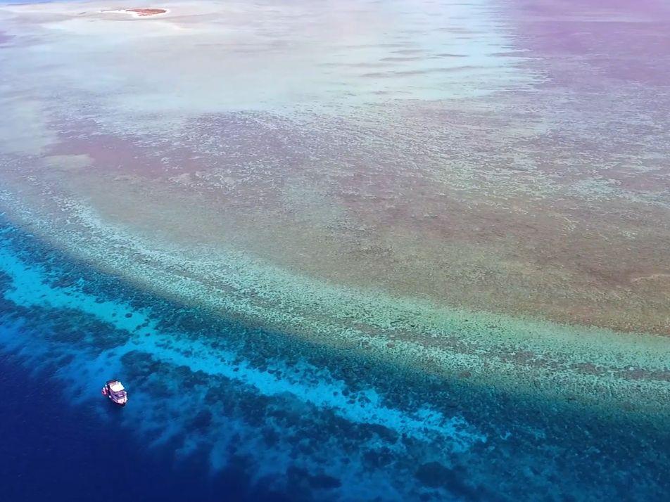 Taucht ab in eines der unberührtesten Korallenriffe der Welt