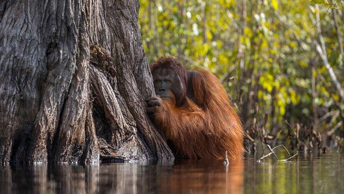 Naturfotograf des Jahres 2017: So wurden die Gewinnerfotos ausgewählt
