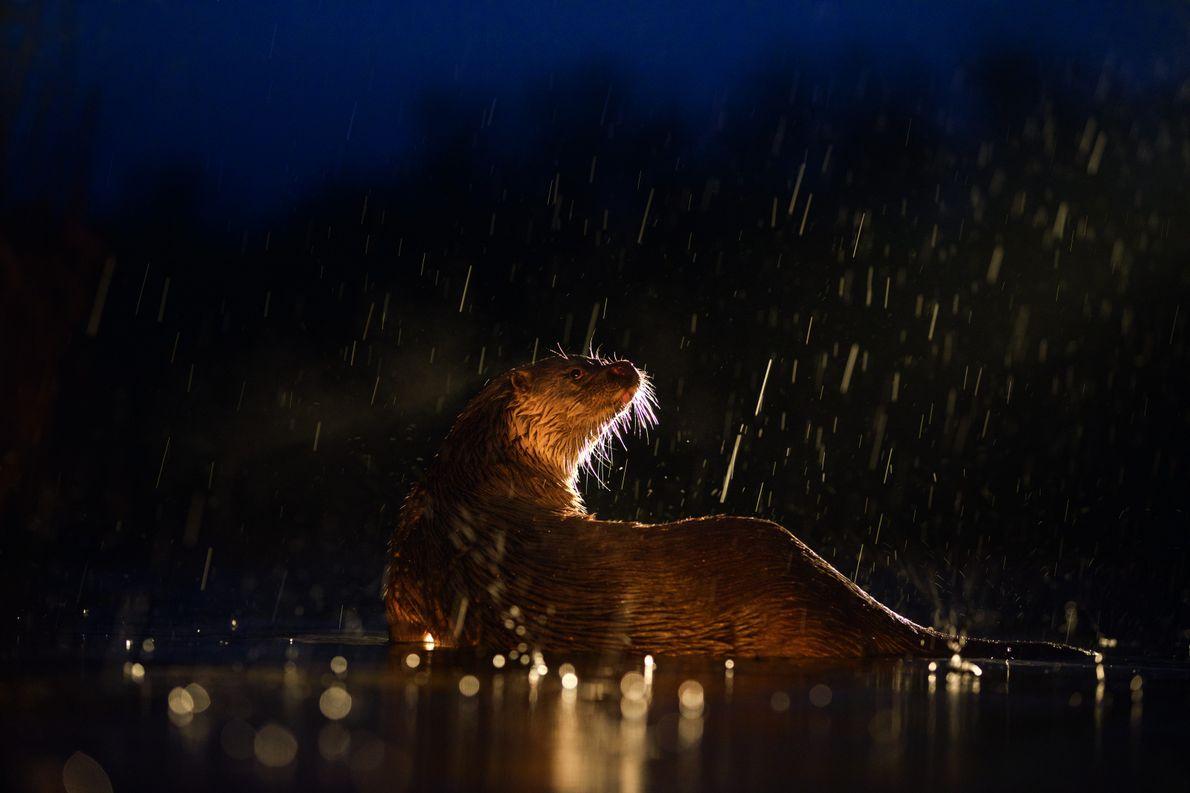 """2. Platz: """"Aufgetaucht"""" von Thomas Hinsche aus Dessau-Roßlau (@photography. hinsche). """"Ein eiskalter Februarmorgen im ungarischen Nationalpark Kiskunság: …"""