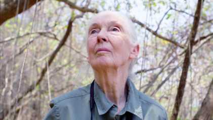 Trailer |  Jane Goodall: Hoffnung
