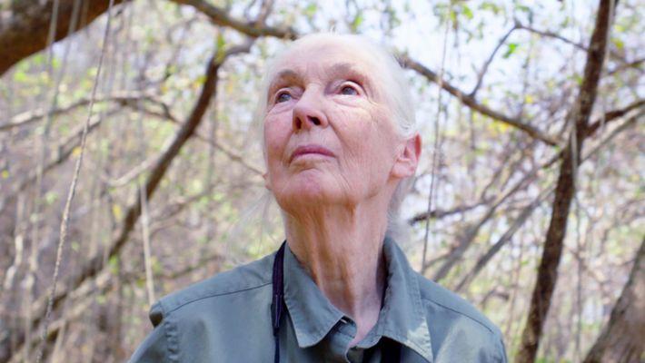 Trailer - Jane Goodall: Hoffnung
