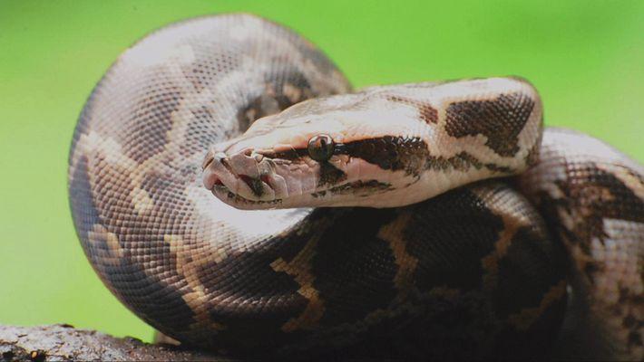 Wissen kompakt: Pythons