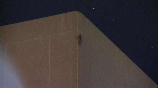 Waschbär klettert 25 Stockwerke hohes Haus hinauf