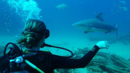 Ökotourismus: Nachhaltigkeit für Mensch und Meer