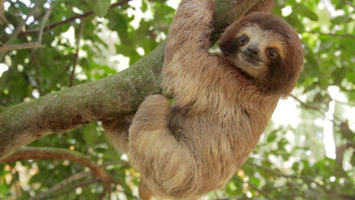 Wissen kompakt: Regenwälder