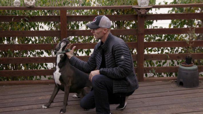 Hundestress: Gesundes Verhalten belohnen