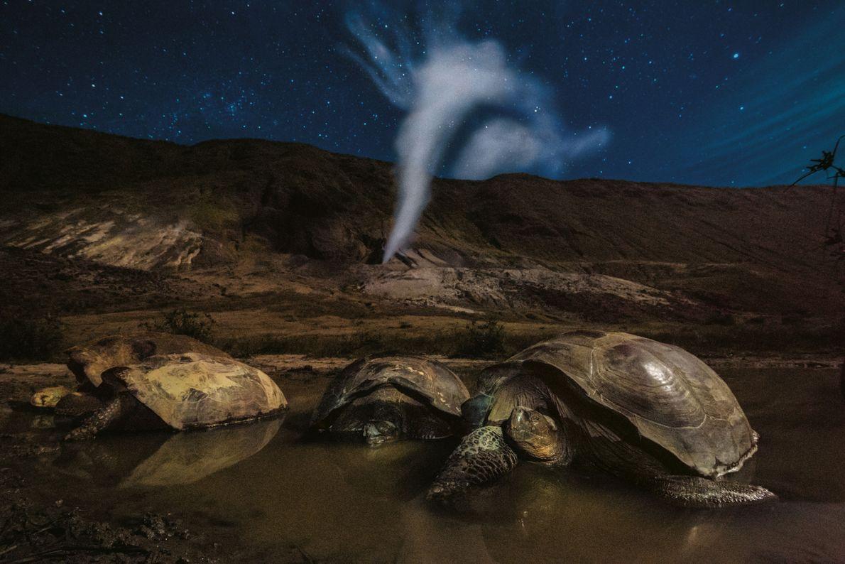 Auf der Isla Isabela liegen Riesenschildkröten im Krater des Volcán Alcedo. So könnte es hier schon ...