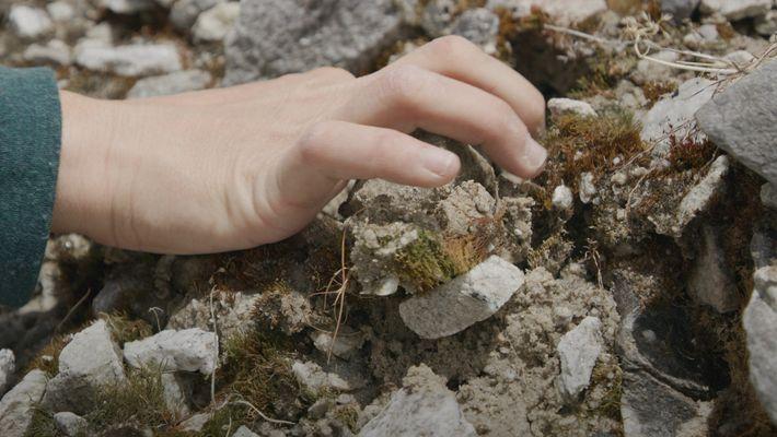 Wie sich das Leben in den Bergen an den Klimawandel anpasst
