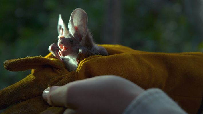 Mit Fledermäusen durch Mexiko | Perpetual Planet: Mexiko