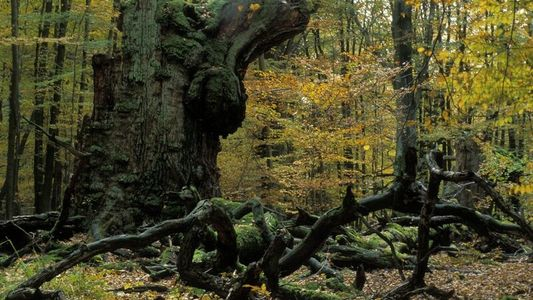 Wälder in NRW besonders stark geschädigt