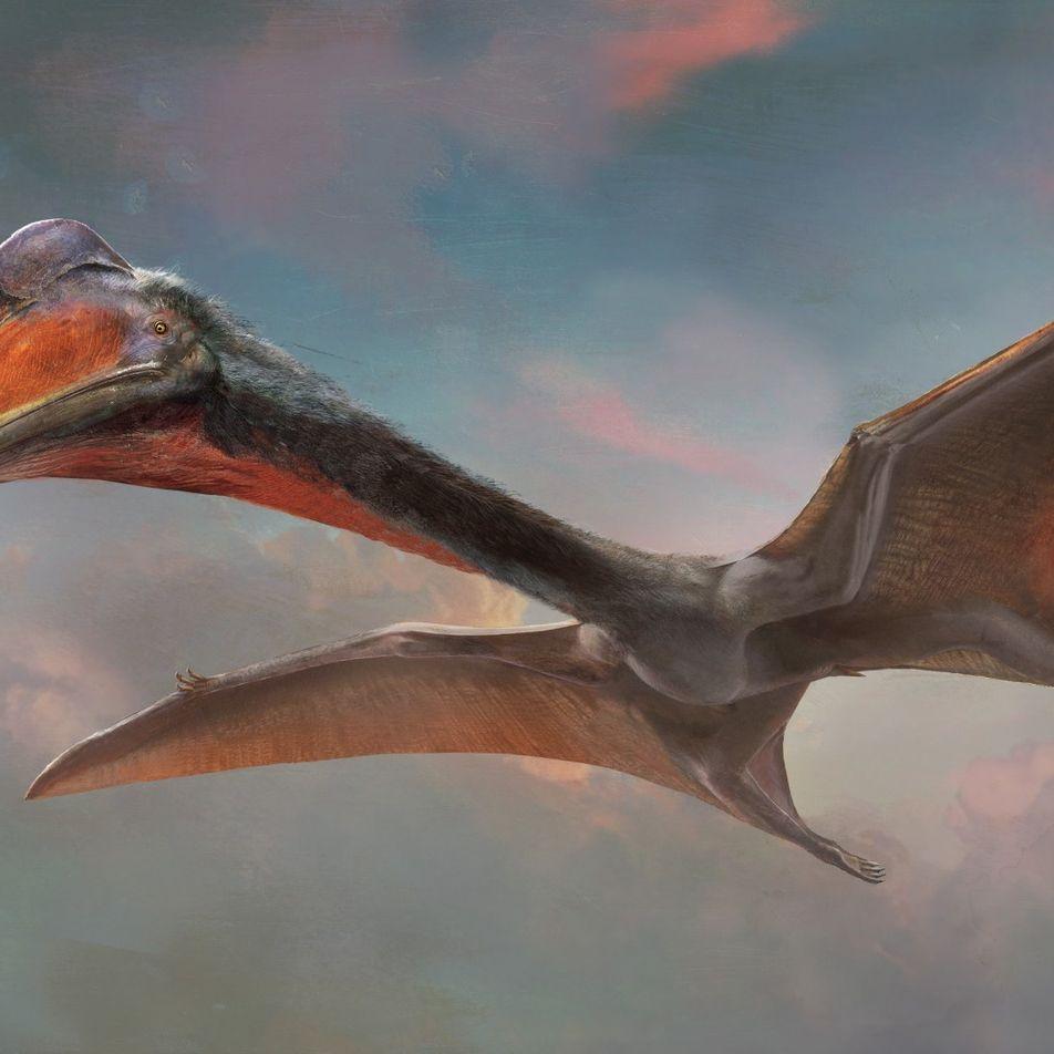 Wissen kompakt: Flugsaurier