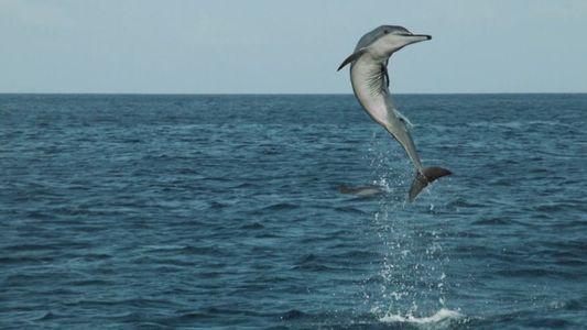 Welttierschutztag: Im Kampf gegen das Artensterben