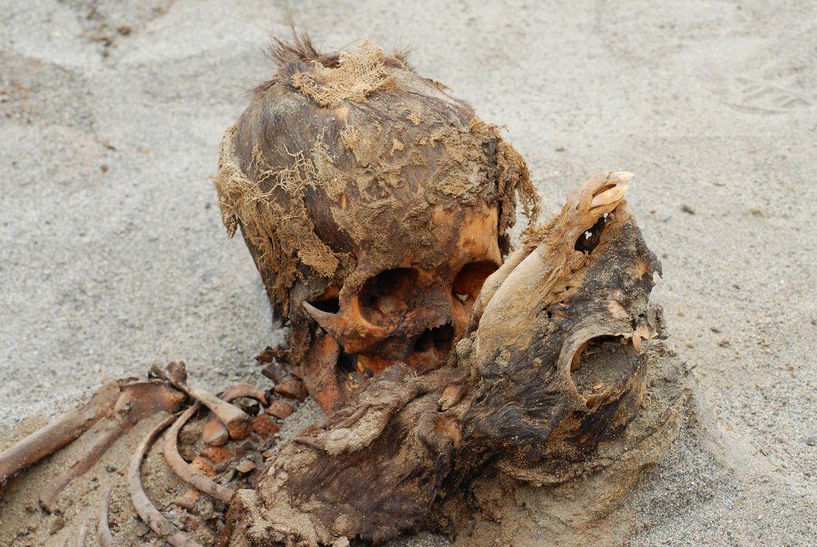 Die Opfer einer Verzweiflungstat: Dieses Kind (links) und das junge Lama (rechts) waren Teil einer rituellen ...