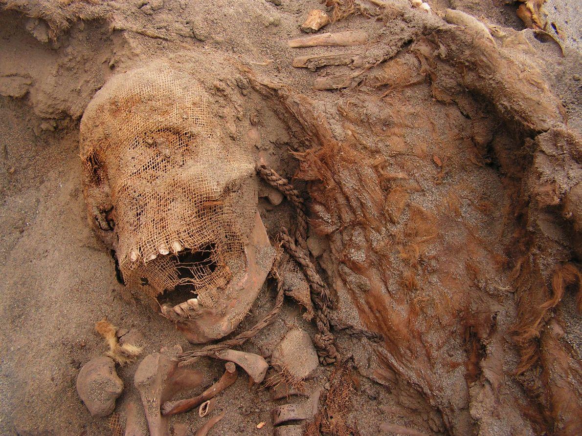 Die Forscher befassen sich weiterhin mit den Ereignissen von Las Lllamas und hoffen, eines Tages erklären ...