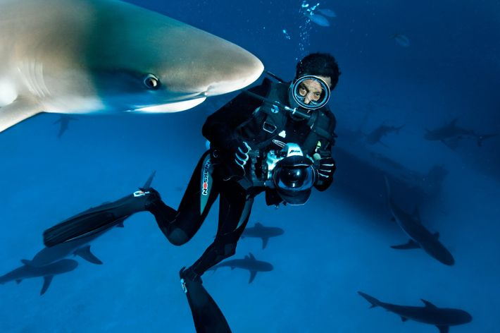 David Doubilet Unterwasser