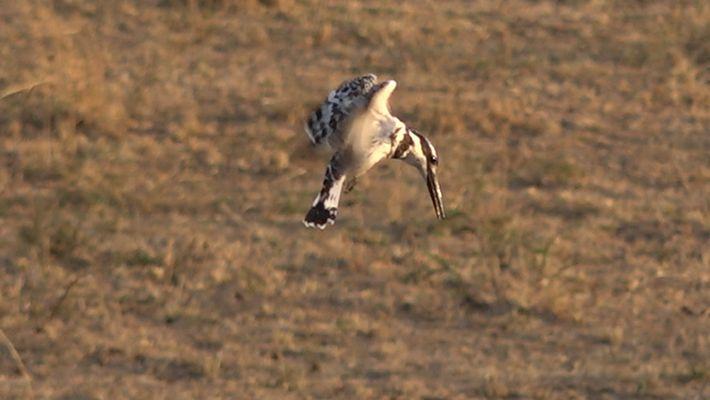 Vogelsafari in Afrika