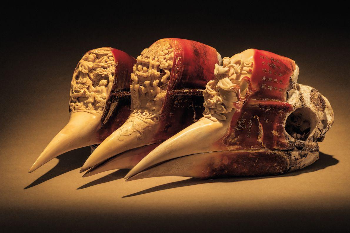 Das Horn des Schildschnabels ist weicher als Elfenbein. So kann man leicht kleine Figuren und Szenen …