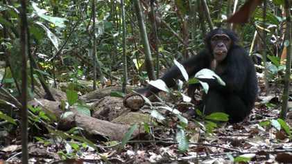 """""""Es sollte Orte des kulturellen Erbes auch für Schimpansen geben"""""""