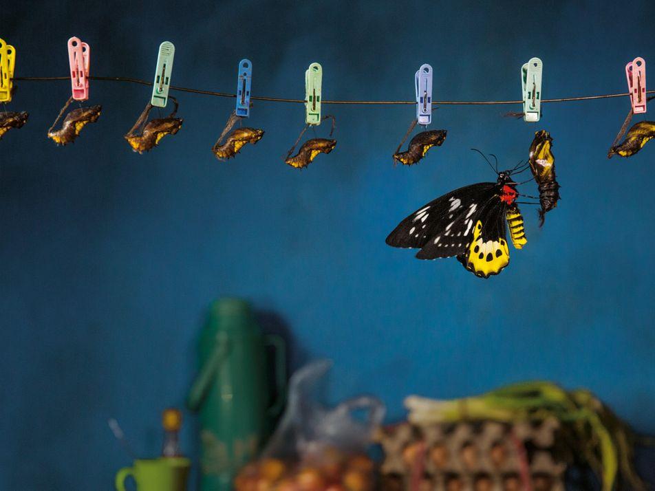 Die Jäger der Schmetterlinge