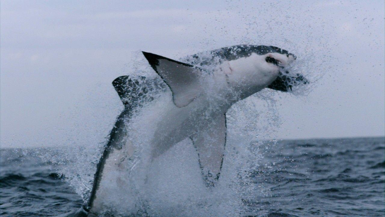 Wissen kompakt: Haie | National Geographic
