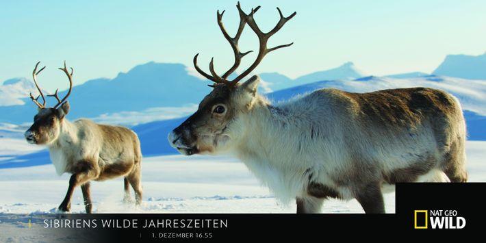 """1. Dezember """"Sibiriens wilde Jahreszeiten"""""""