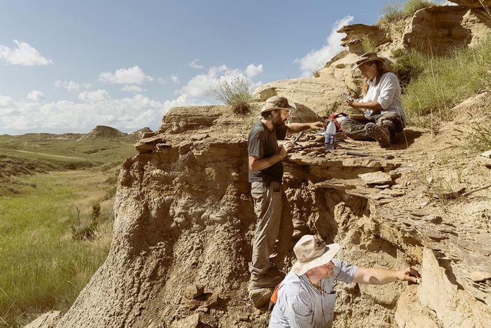 Das Senckenberg Team entdeckt einen neuen fossilführenden Horizont: Besonders Microfossilien und  kleine Bruchstücke können dem ...