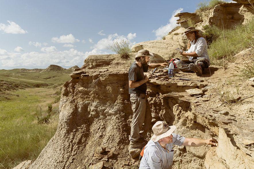Das Senckenberg Team entdeckt einen neuen fossilführenden Horizont: Besonders Microfossilien undkleine Bruchstücke können dem Paläontologen viel ...