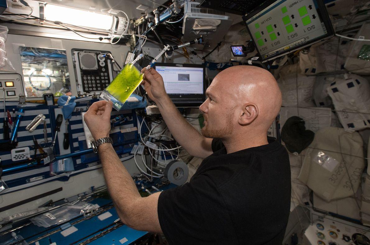 ESA-Astronaut Alexander Gerst bei einem Mikroalgenexperiment im Juli 2018.