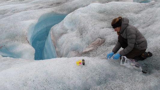 Wie Schnee- und Eisalgen die Gletscher schmelzen lassen