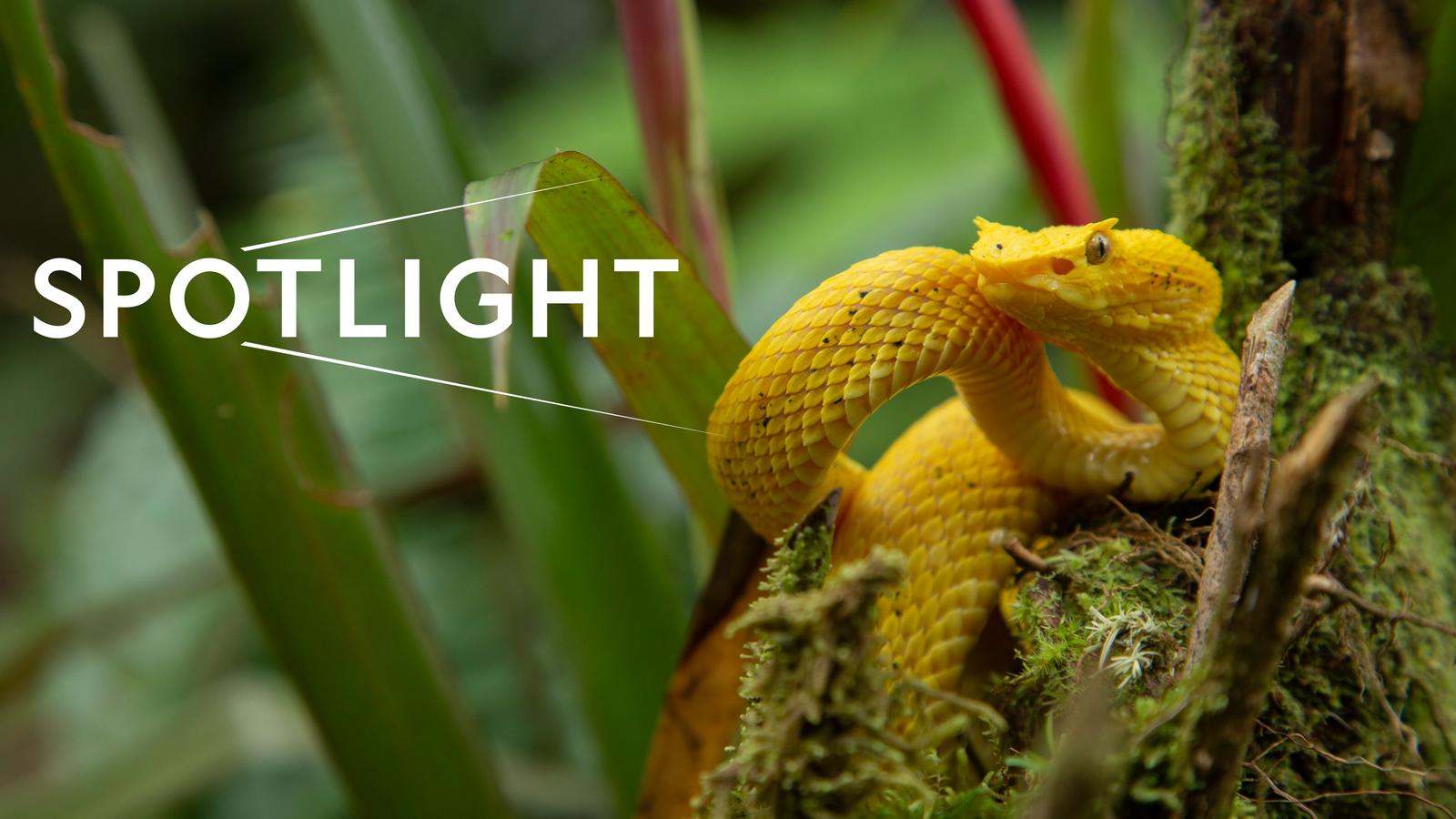 Spotlight-Costa-Rica.png