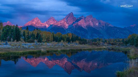 Wilder Yellowstone: Alphaweibchen