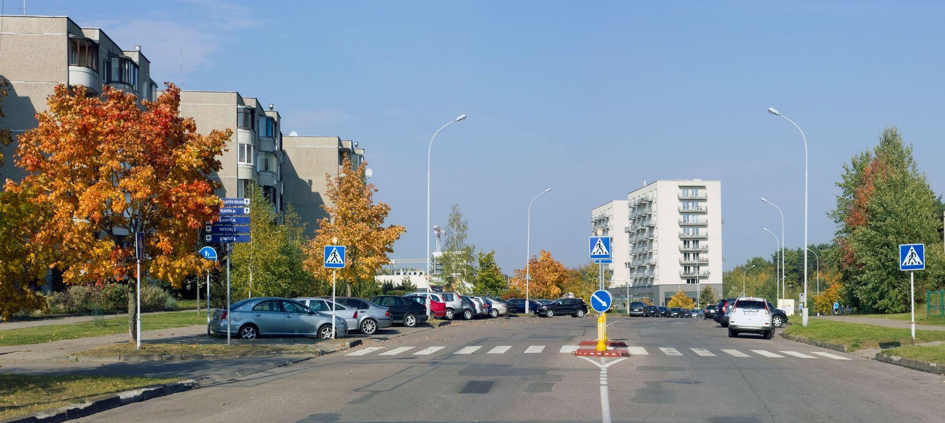 Stadtbäume zwischen Straßen und Gebäuden haben es besonders schwer.