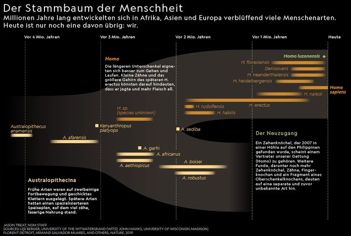 Infografik: Ursprünge des Menschen