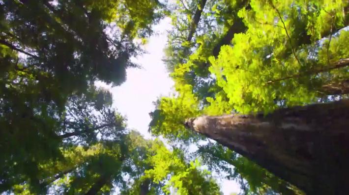 Die Bäume des Parks Del Norte Coast Redwoods dienten als Kulisse für den Waldmond Endor in ...