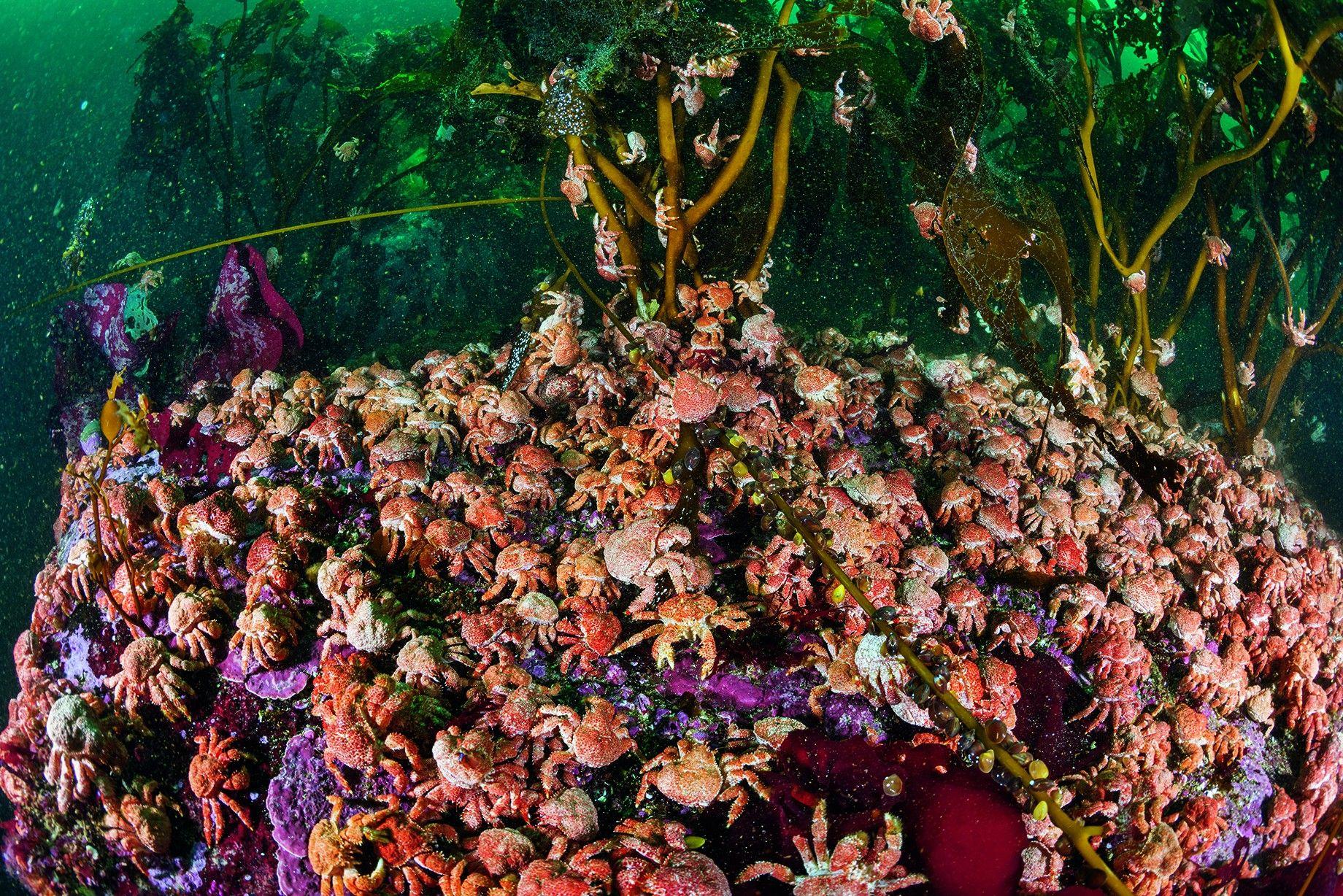 Galerie: Das Meer am Ende der Welt   National Geographic